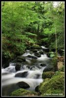 Kennall Vale Nature Reserve by Kernow-Photography