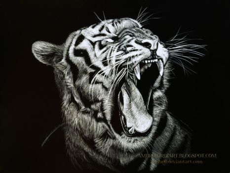 Tiger Scratchboard by AmBr0