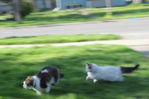 Mid-Chase by Tinker-Jet