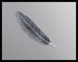 Feather by azus