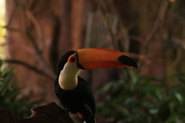 Toucan Stock 1 by shhhhh-art-Stock