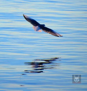 The Banking Seagull by wolfwings1