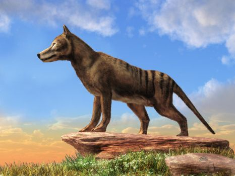 Thylacine by deskridge