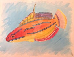Watercolor McCoskers Wrasse by atreyu917