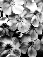 Black and White Flowers by Saxophrenic25