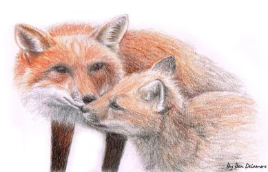#59: Foxes Doodle by Ben-Delamore
