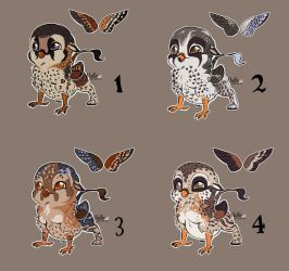 Pygmy gryphons adopt  all sold by mydlas