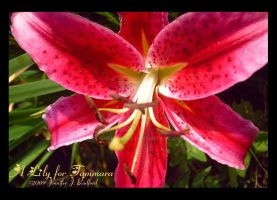 A Lily for Tammara by Jenna-Rose