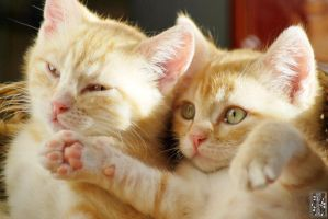 Two brothers by Moyrah