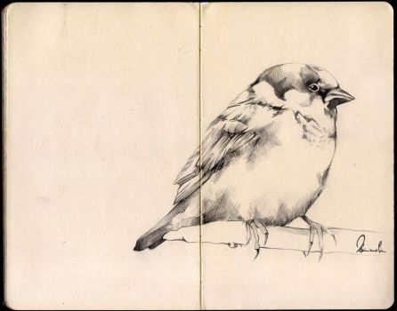 Sketchbook Bird by kleinmeli
