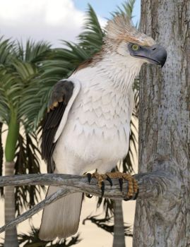 Phillipine Eagle by KenGilliland