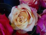 Roses 6 by greenaleydis-stock
