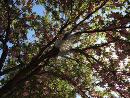 Under a Cherry Blossom by Bestestcat