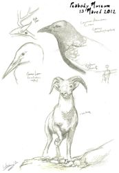 Peabody Museum Sketches by Luthrai