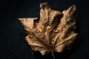 Letters From The Autumn IV by JoannaRzeznikowska