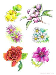 Flower study by manapi