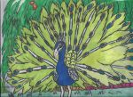 The Indian Peacock by TheZackBurg