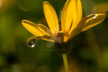 drop by jestonphotography
