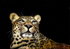 Chinese Panther by shonechacko