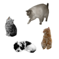 puppy and cats FREE png stock by JaneEden