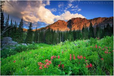 Indian Paintbrush and Evening Light by tourofnature