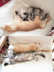Sleeping kitties by Owps