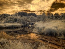 gold ir sunset by JustOldPurpleAngel