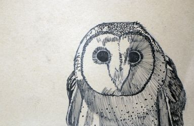 Masked Owl Drawing by Marchio08