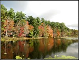 Fall at the Pond by Michies-Photographyy