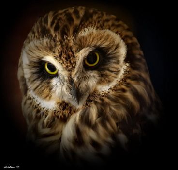Owl by Lilia73