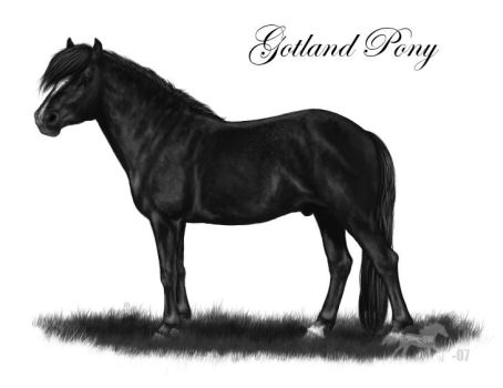 Gotland Pony for Project-Dream by SheWolff