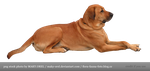 PNG STOCK: Golden dog by MAKY-OREL