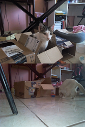 Cat in boxes by Jazmir97
