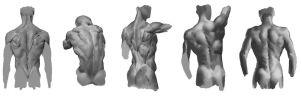 Back studies by Call0ps