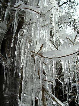 Icicle Cluster by alicia86