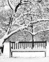 Snowy Bench 02 by StudioFovea