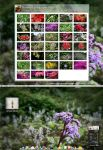Flowers Widescr Wallpaper Pack by hombre-cz