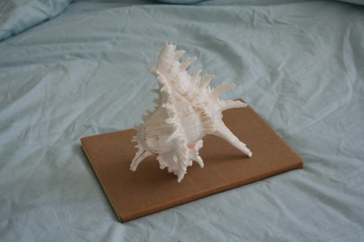 Large_comb_conch_shell by ReiGau