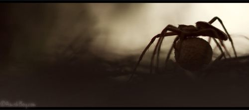 Into the spider's den by AimishBoy