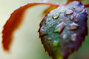 Macro Colour World 1 by andyjh07
