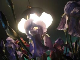 Irises lit from behind by thescarletaracnid