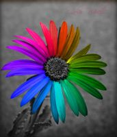 :: color wheel :: by Gezusfreek
