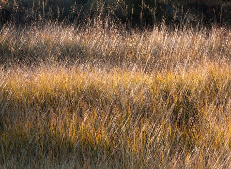 Dune Grass by JamesHackland