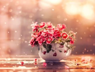 A cup of beauty by arefin03