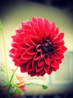 Vintage Flower by ilhaman