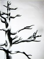Tree ink drawing by VanCityArtist