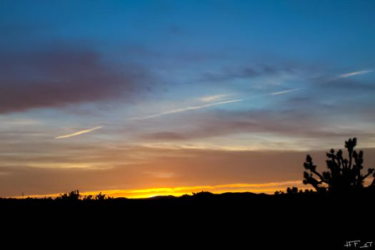 Joshua Tree Forest Sunset by Heather-Ferris