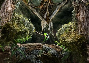 two leaves meet deep inside a fantastic forest by MatzeR