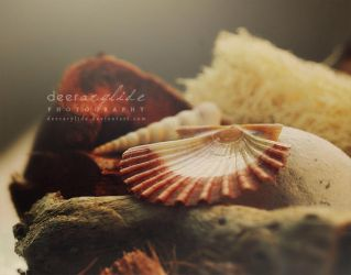 What remains by deerArylide