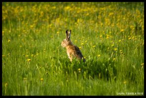 The lone hare by Murklins